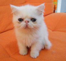 优基猫粮怎么样 不建议购买散装猫粮