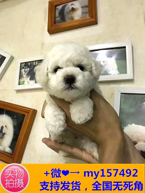 中山CKU认证犬舍