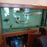 寄生虫对观赏鱼的三大影响