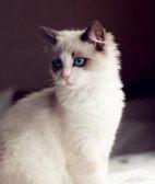 伊纳宝猫粮怎么样 注意口味的挑选