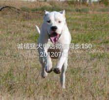 苏州最大专业养殖基地,各类纯种名犬 支持上门看狗全国发货