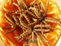 北京冬虫夏草回收