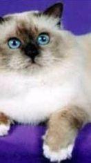猫能不能吃虾 猫咪可以吃海鲜吗