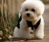 北京宠物寄养小型犬