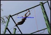 泰山拓展训练项目-空中单杠