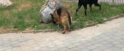 奥运村专业寄养猫猫狗狗 常年寄养 养老 可上门接送宠物
