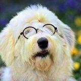 杜宾犬幼犬多少钱一只
