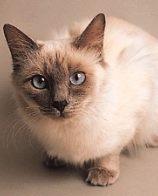 卡比猫粮多少钱 天然猫粮价格较高