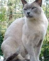 公猫与母猫的区别 公猫饲养会比较容易点