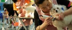 武汉傲雄宠物美容学校,C级班将于12月20号开班