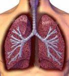 肺主气、司呼吸的理解