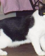 减肥猫粮哪种好 猫咪减肥要注意运动