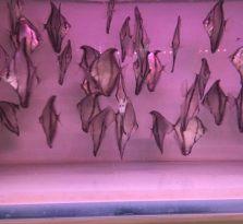 南京热带观赏鱼销售与配送
