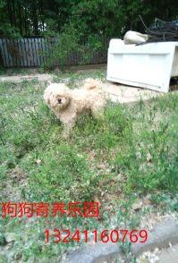 香山家庭宠物寄养 长短期寄养猫猫狗狗散养养老接收流浪狗