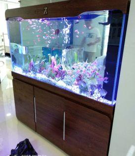 专业订做鱼刚,鱼刚清洗,行业 质优价廉