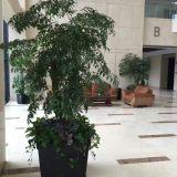 张江专业绿植租赁、苗圃发货价格上海最低