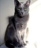 暹罗猫好养吗 五种正确方法的饲养方法