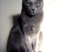 暹罗猫好养吗 五种正确方法的