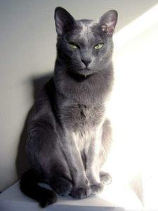 宠物猫 (18)