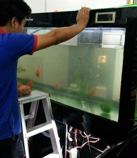 深圳市南山专业清洗鱼缸
