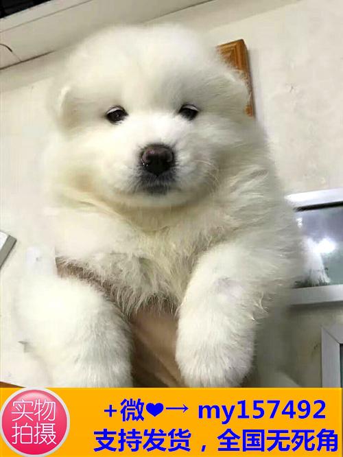 福州CKU认证犬舍