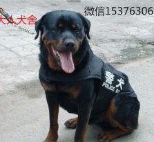 精品罗威纳 全国包邮 常年出售各种宠物犬 自家养殖