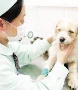 深圳24小时宠物急诊医院