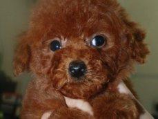 精品幼犬 大量现货 常年有货