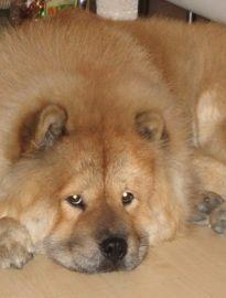 泉州哪里有小狗领养 泉州哪里有小狗赠送