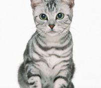 公猫与母猫的区别 公猫饲养会