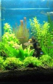 鱼缸消毒杀菌