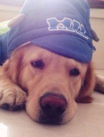 长沙宠物狗领养中心 只需身份证实名领养