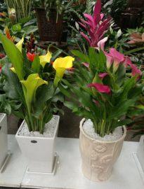 哈尔滨松北年宵花卉优惠预订完善的售后服务