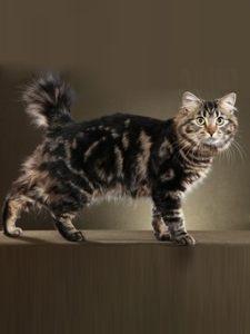 宠物猫 (22)