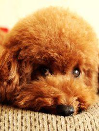 宁波狗狗领养中心 只需身份证实名领养