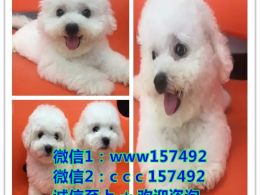 北京正规犬舍 如果你真的爱狗 想养条好狗 请进来看看