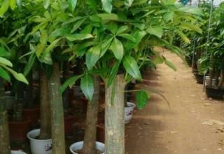 园林苗木销售