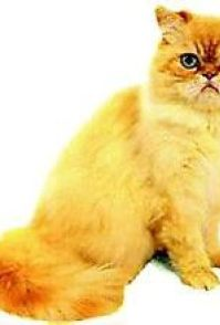 豹猫可以养吗 野生的豹猫是濒危保护动物