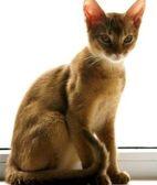 猫咪足部护理方法  帮你的心爱猫咪做个足疗吧