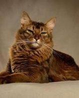 麻瓜猫粮好吗 不能喂食过期的猫粮