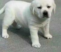 长沙官方认证宠物领养中心 现