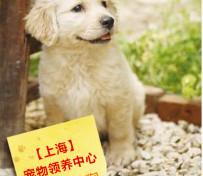 上海待领养猫猫狗狗们