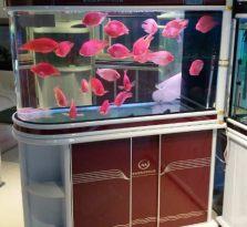 南京家庭观赏鱼缸销售