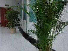 重庆植物销售