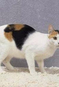 迪尤克猫粮怎么样 喂养新生小猫要注意