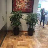 张江办公绿植花卉租赁、庭院绿化景观设计