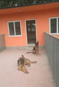 双井专业寄养猫猫狗狗 常年寄养 养老 可上门接送宠物