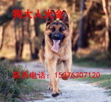贵阳哪里有好的德牧德国牧羊犬价格 德国牧羊犬图片 德牧幼犬