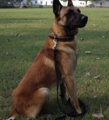 宠物狗 (28)