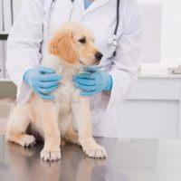宠物救助案例